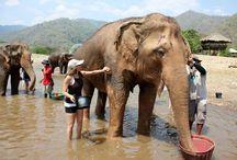 Travel: Chiang Mai