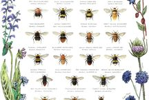 Bumblebees