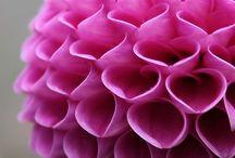 flower wow / flowers