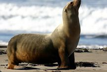 My Wonder Zoo : Seabeart ! / animals