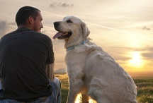 Dog Stories / Who doesn't love a good story involving dogs? #dogs #stories