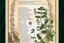Planse plante