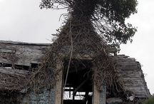 interessante huizen en bomen