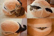 Kity Cats
