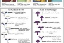 Mushroom - Info(graphics)