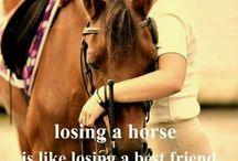 A // Sad Horse