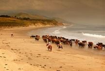 Horses / by Linda Woods