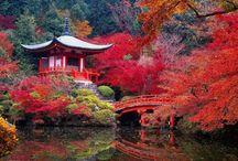 JAPAN / by Kickan Galle