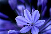 Flowers Flowers Flowers / Different flowers from all around