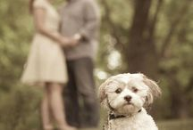 Prewedding with dog