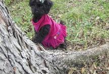 Mimi-my DOGther / by La2La Marketing