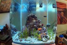 Mediterranean aquarium / Mediterraneo in 60 litri