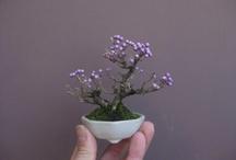 bonsai / by margaryta margaryta