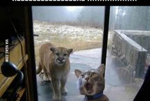 Humor & Cute Animals