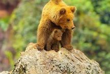 Αρκούδες ♡♡