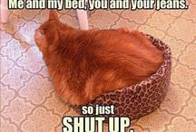 The Funny Katzes of Dicke Katze.