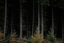 Habitat / landscapes for comfort and wanderlust