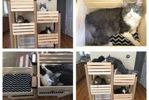 dla koteczków
