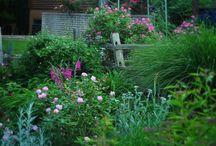 Garden / by Steven Olsen