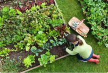 Gardening & Outdoor Living / by Autumn Jones @ He Fills My Cup