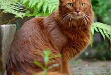 Cats / Simple pictures of cool cats
