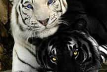 Animals 4 All / All Animals found here, something for everyone to love and pin :) / by Danny Moon ^_^