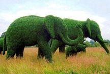 Arte Topiaria Elefante