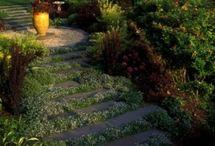 Garden / by Barbara Sherratt