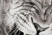 Wild Animals / by Gabby McMillen