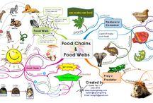 Catene alimentari