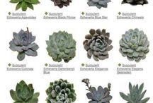 succulents&garden