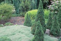 Garden! / by Jodie Davis