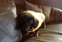 Nino the dog