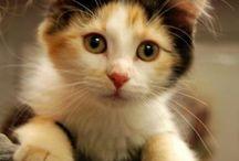 Kitties / by Linda Kapusta