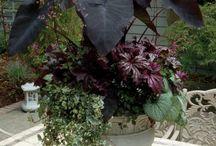 Gardening Genius / by Jamie Thibodeaux