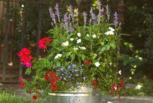 gardening / by Deni Weatherholt Mitchell