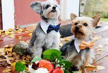 BEZ BEZY ślubne Inspiracje / Pies na weselu / http://bezbezy.pl/