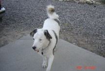 """Our beautiful and gifted special boy Ozzie / Ozzie was blind and deaf from birth, but that didn't slow him down one bit. We lost him a few years ago. """"I miss our walks buddy."""" We love you!"""