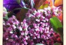 Kulkakimppuja, kukkia / Kauniita kukkia, kauniita kimppuja, korteiksi, koristeiksi