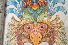 Livro Aves do Paraíso