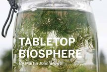 Gardening: table top