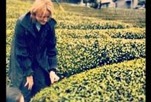 Christine Dattner au Japon /  #tea #thes #teaporn #tealover #lifestyle #luxury #teatime #degustation #teaclub #health #healthy #greentea #teathings #teablog #food #foodporn #yummy #indulge #pleasure #harmony