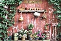 Herbs / by Julie Steigerwalt