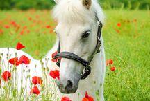 Konie /  w różnych odsłonach