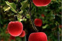 fruitz n fancy