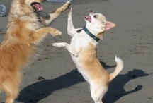AK Pups