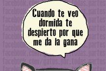 Gatitos ♥ ♥