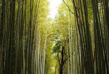 Zen Garden | Kyoto