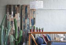 suculentas: cactus y crasas