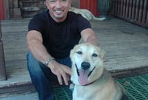 cesar millan / by Candee Nobbs